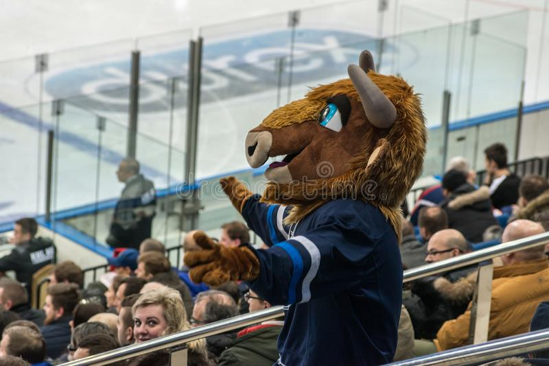 Ice hockey fan wearing animal outfit royalty free stock photos