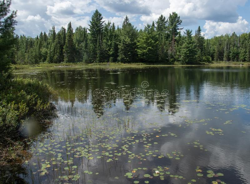 Peck lake May flora in Algonquin Park Canada stock photos