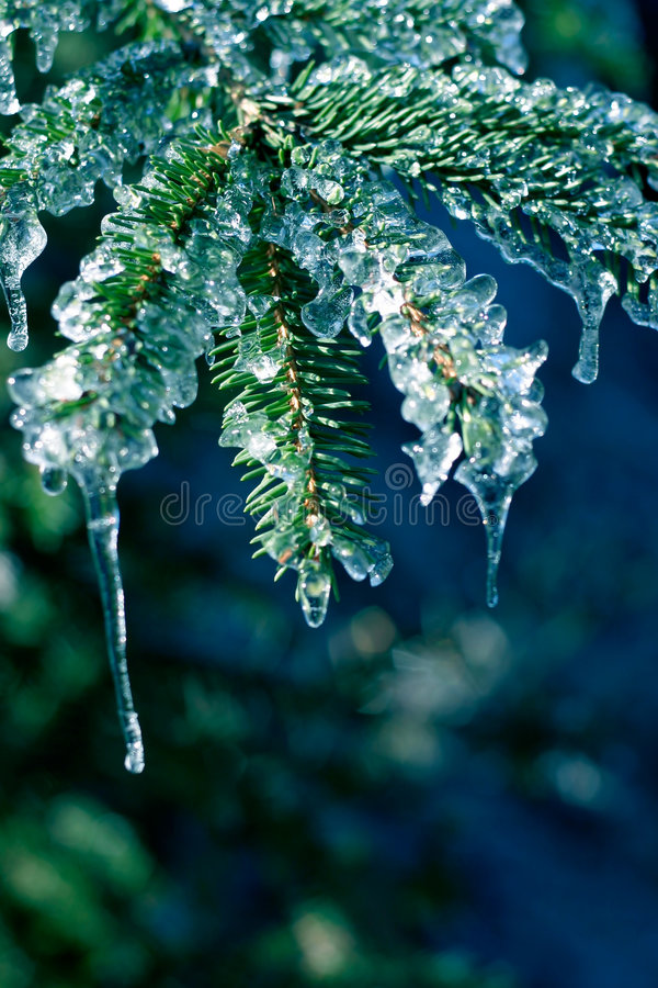 Download Ice on Pine Tree stock image. Image of green, color, greeting - 384613