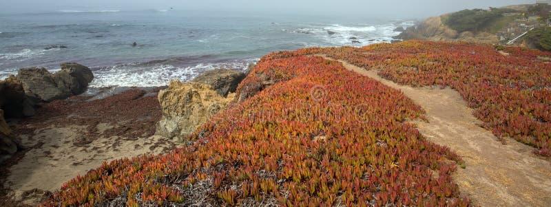 Ice plant on Bluff trail on rugged Central California coastline at Cambria California USA stock image