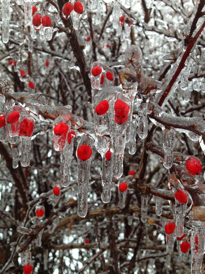 Ice of red berries stock image