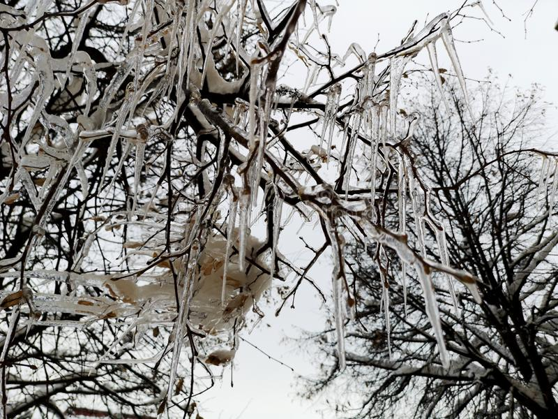 Ice and snow on on a branch after a sleet in Moscow suburbs royalty free stock photo