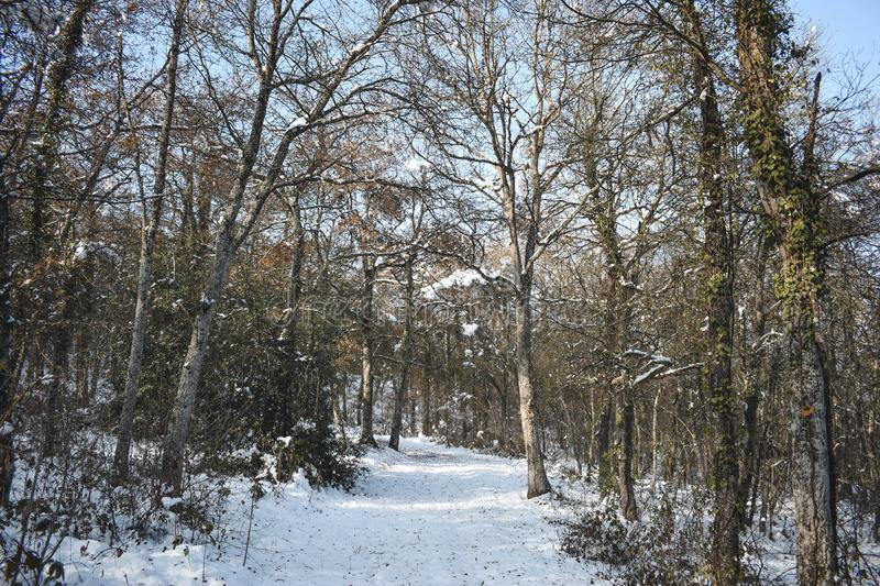 Ice and snow in high trees stock photos