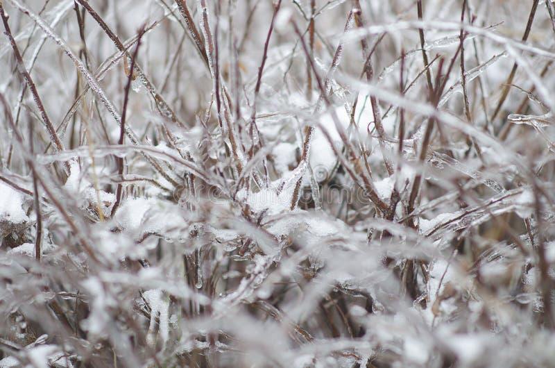 Ice on sticks stock photo