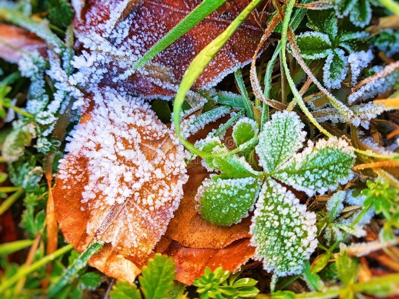 Ice vegetation royalty free stock photos