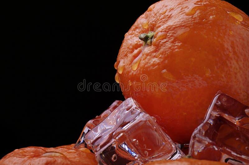 ice7 mandarynka obraz royalty free