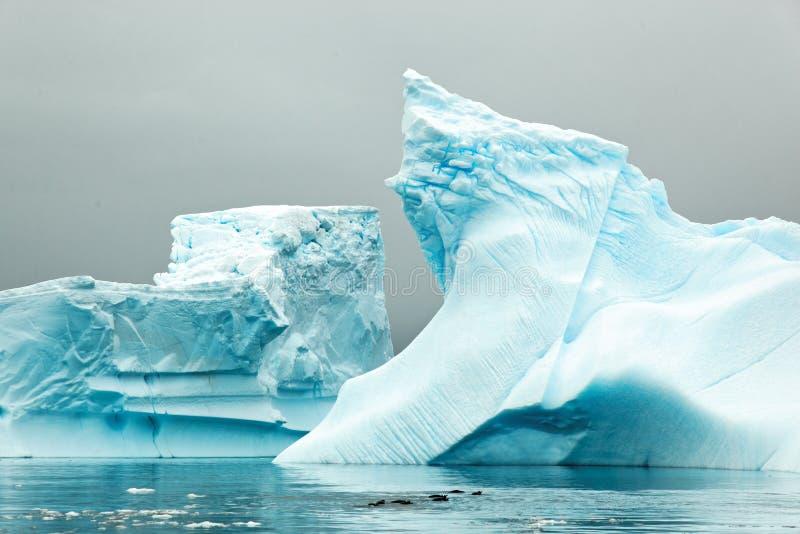 Iceberg in Antartica immagine stock
