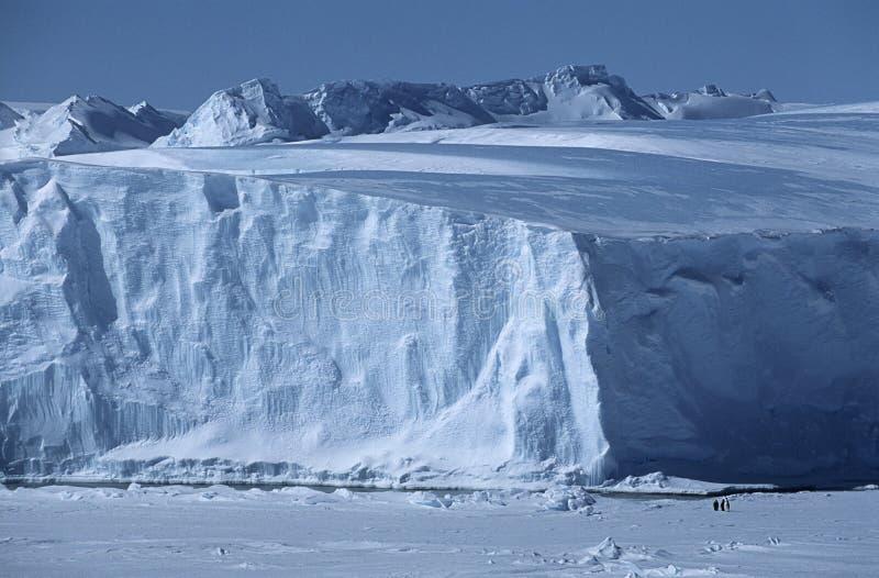 Iceberg del banco di ghiaccio di Riiser Larsen di mare di Weddel dell'Antartide con i pinguini di imperatore fotografia stock libera da diritti