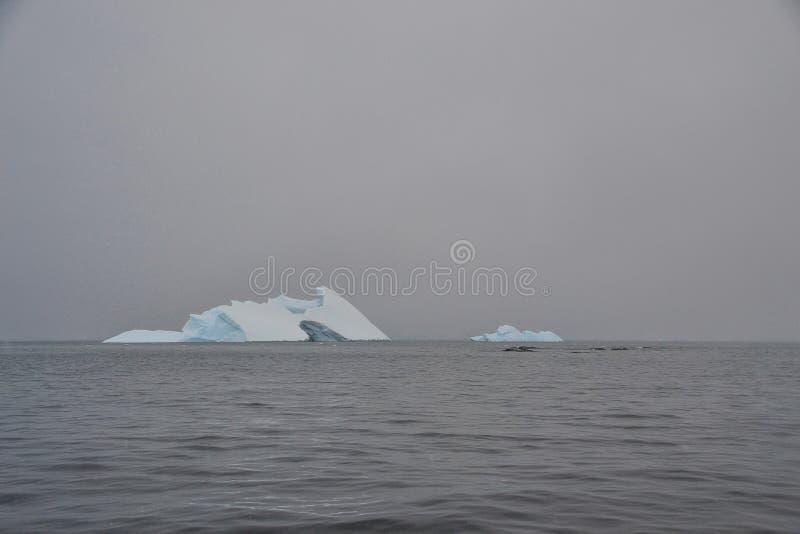 Iceberg lizenzfreie stockfotografie