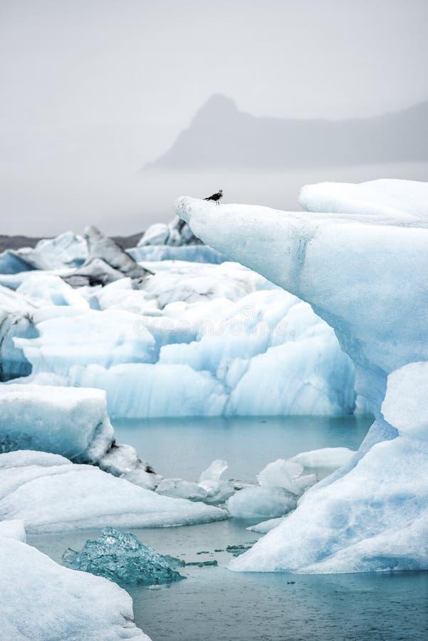 Icebergs que flotan en la laguna de Jokulsarlon en Islandia imagen de archivo
