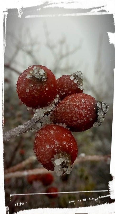 Iceberry obrazy royalty free