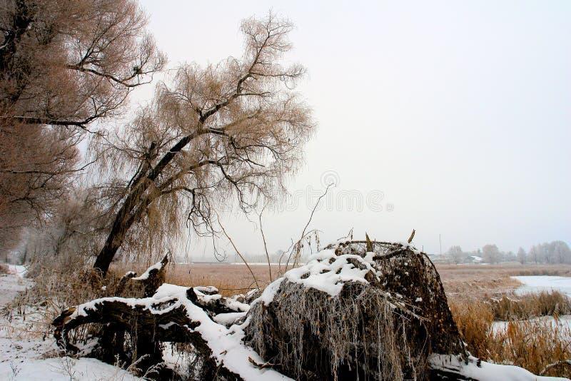 Icebound lake. In winter royalty free stock photos