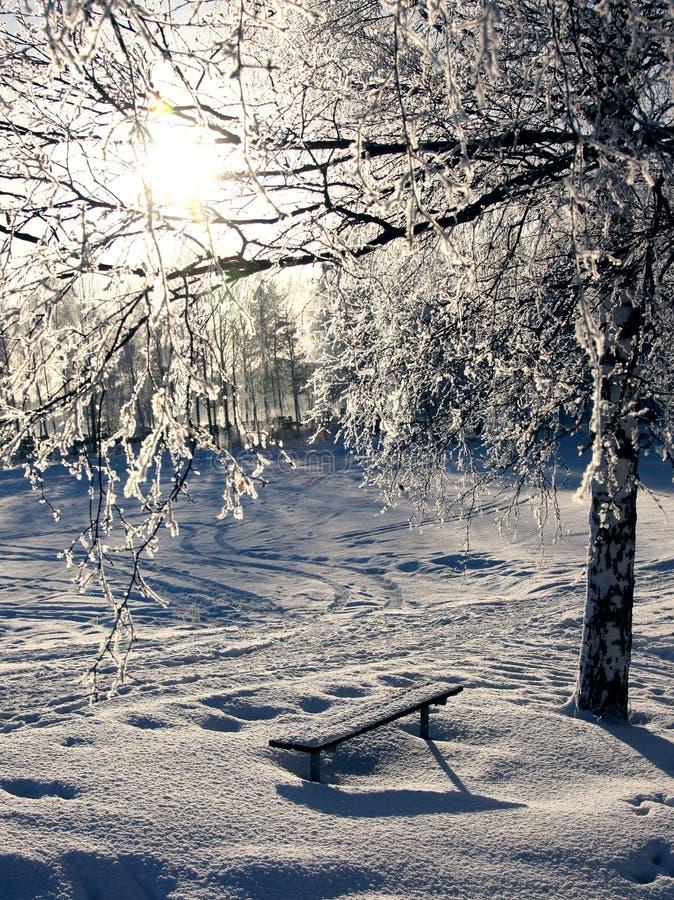 icecold solljusvinter för björk royaltyfri bild