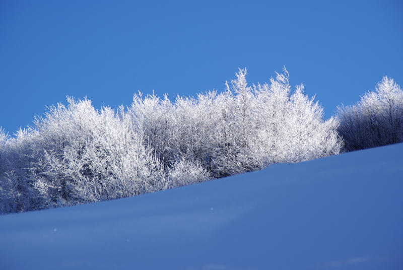 Iced branches royalty free stock photo