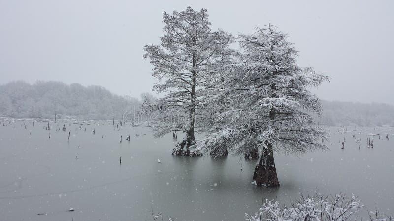 iced drzewo obrazy stock