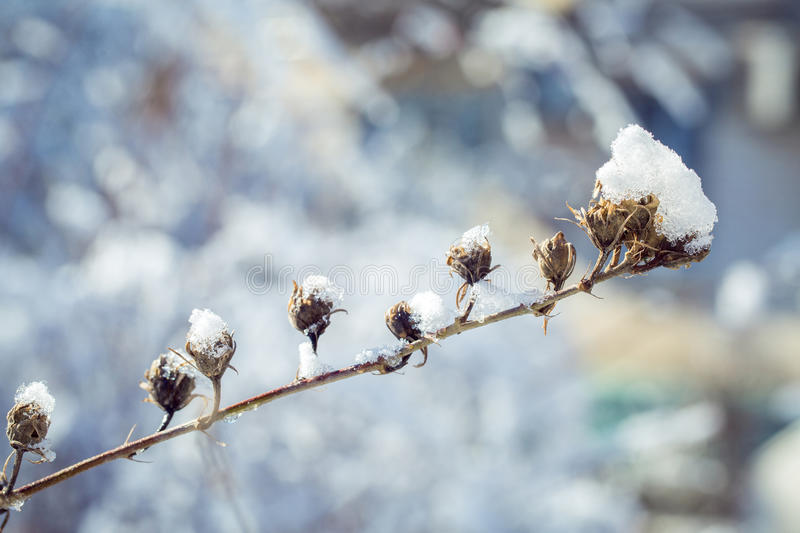 The iced over branches of a bush against the dark blue sky stock photography