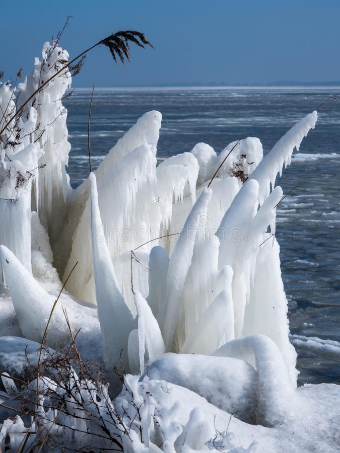 Frozen reeds in winter. Iced reeds on the shore of a frozen lake royalty free stock photos