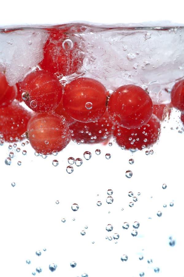 Download Iced vinbär fotografering för bildbyråer. Bild av sodavatten - 19790797