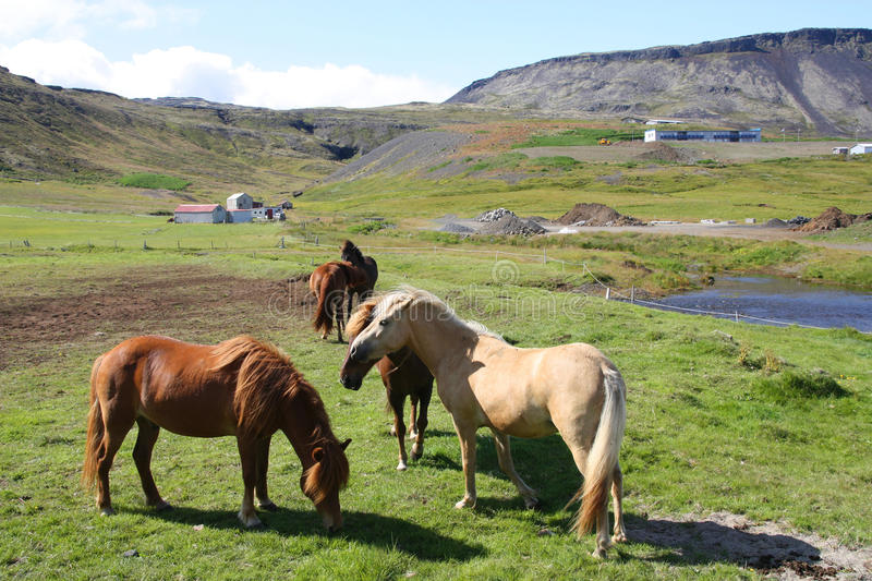 Download Iceland stock photo. Image of mountains, horse, icelandic - 11817886