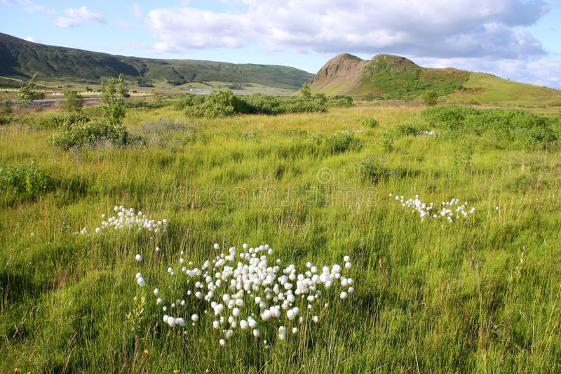 Download Iceland stock photo. Image of travel, meadow, natural - 12550816