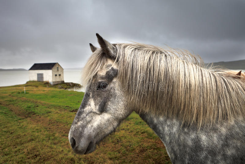 Iceland dom i hosrse zdjęcie royalty free