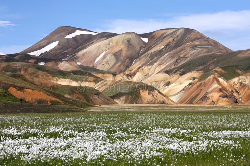 Iceland - Landmannalaugar. Iceland. Beautiful mountains and white cottongrass flowers. Famous volcanic area with rhyolite rocks - Landmannalaugar royalty free stock photography