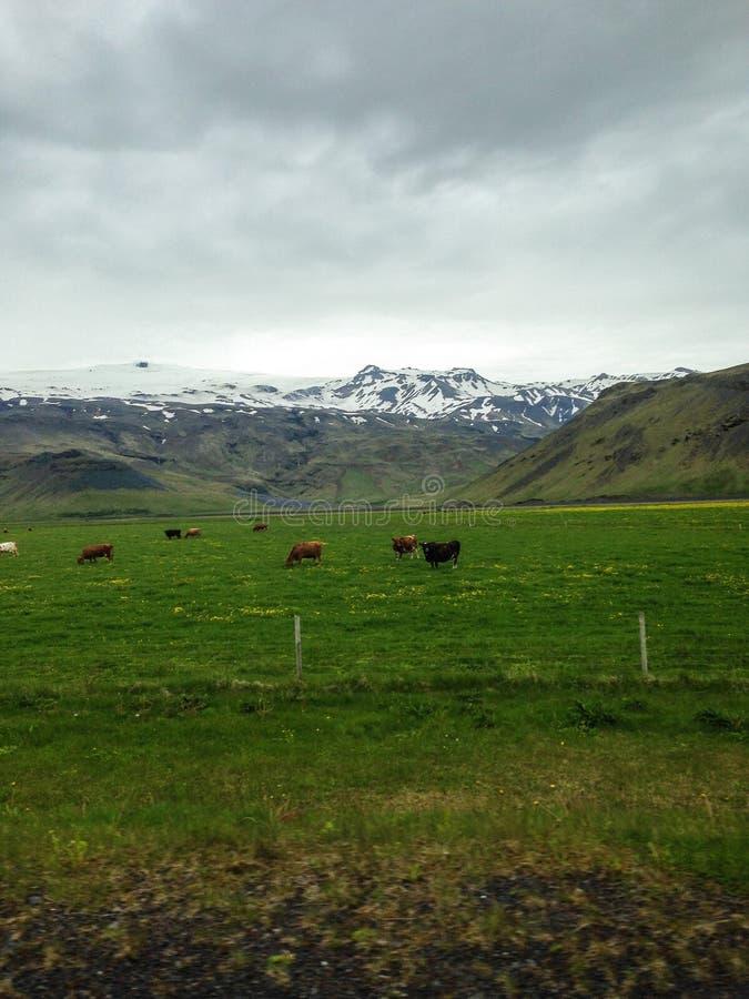 Iceland. Landscapes stock photos