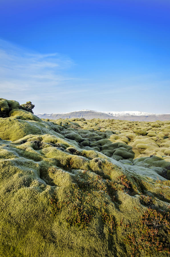 Iceland Lava field stock images