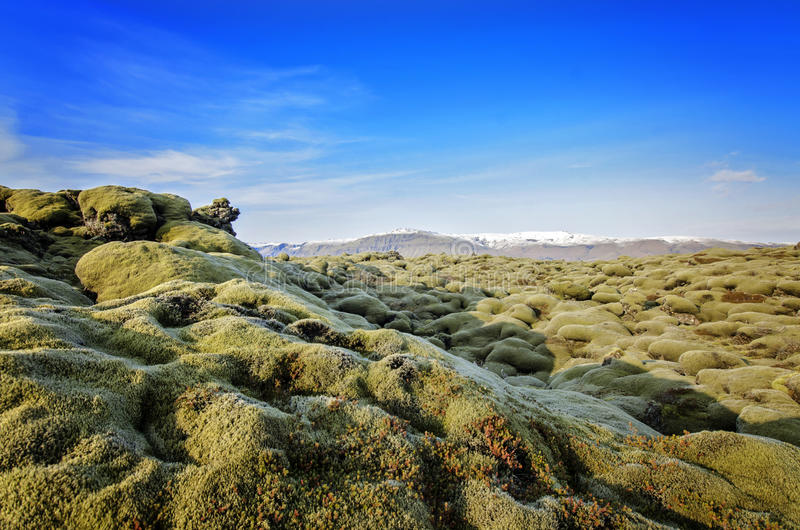 Iceland Lava field stock image