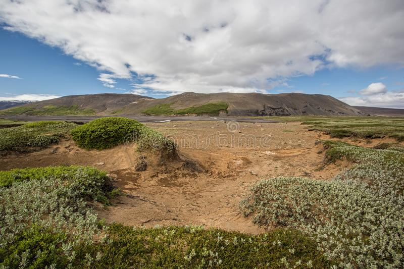 Iceland nature scenery. With green low vegetation and sand in foreground and mountain in background. Nordic summer sunny landscape royalty free stock images
