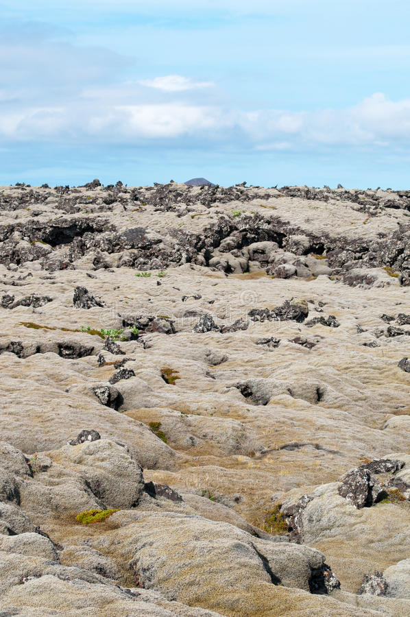 Iceland, Northern Europe, lava, Reykjanes Peninsula, moss, landscape, climate change, nature. Landscape with lava fields in Reykjanes Peninsula on August 16 royalty free stock photo