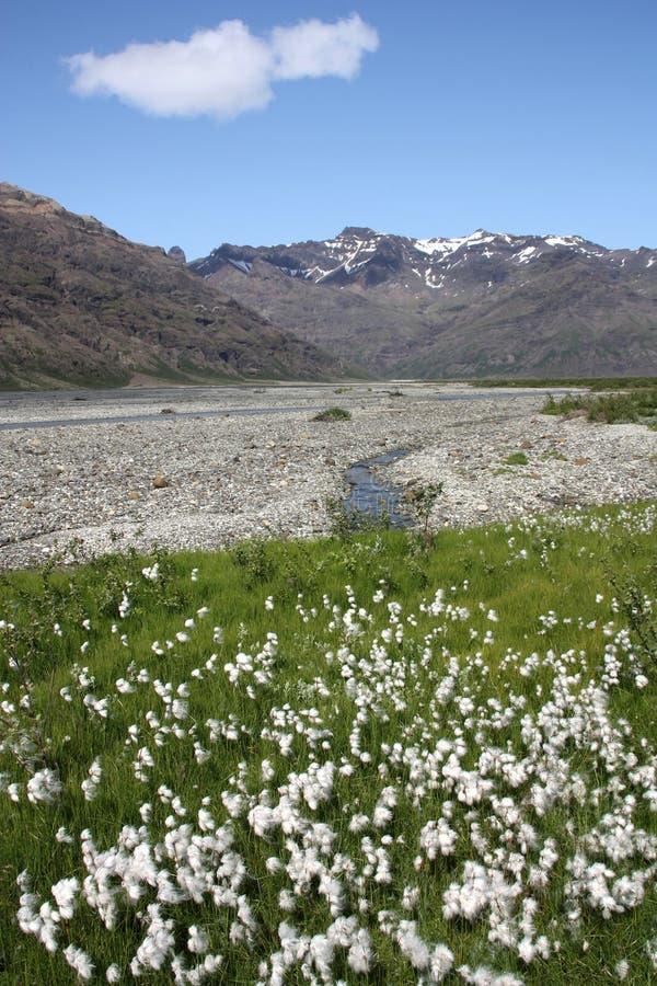 iceland park narodowy skaftafell fotografia royalty free