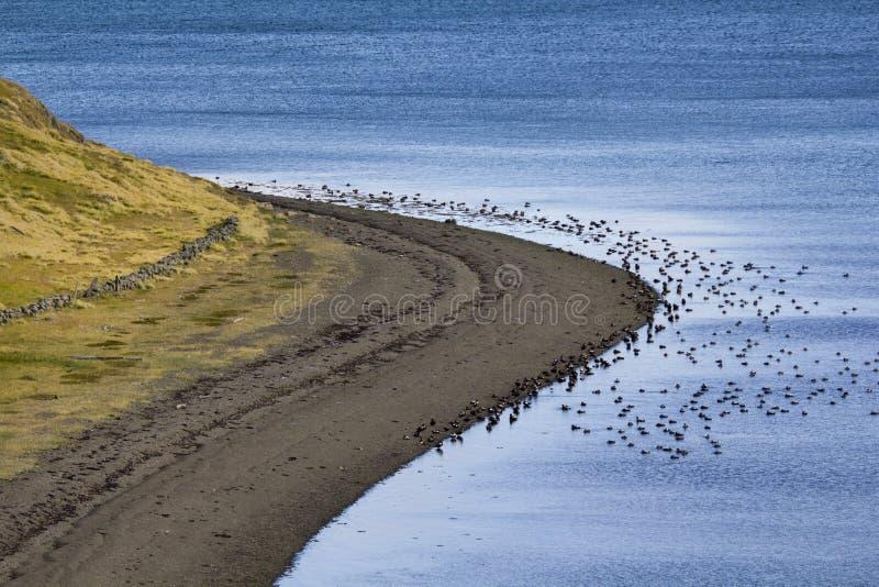 Download Iceland shore stock photo. Image of waterline, coastline - 28110768