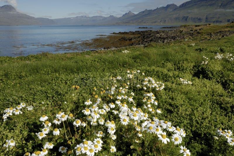 Download Iceland summer landscape. stock photo. Image of coast - 25803424