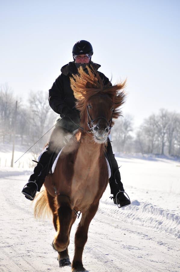 icelandic лошади конкуренции стоковые фото
