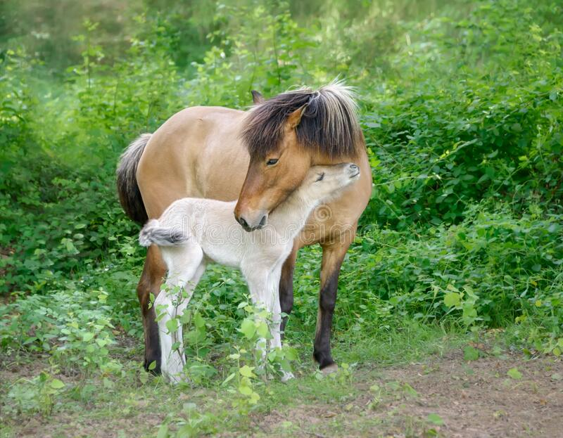 1 850 Mother Baby Horses Photos Free Royalty Free Stock Photos From Dreamstime
