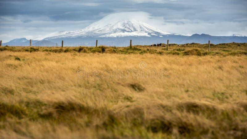 Icelandic landscape. stock images