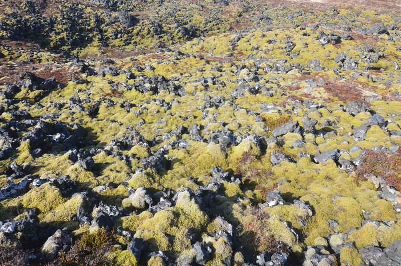 Icelandic lava field with black volcanic rocks royalty free stock image