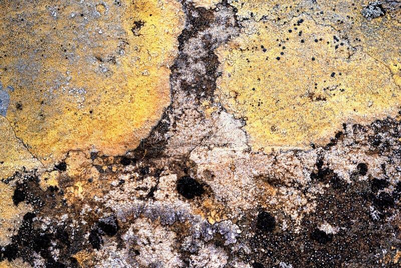 Icelandic lichens stock photography