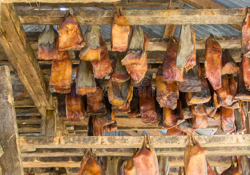 Icelands fermented shark. At Bjarnarhofn Shark Museum drying house, Iceland royalty free stock images