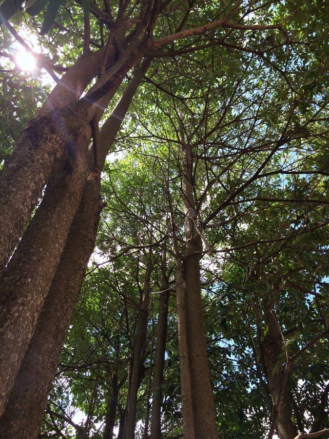 Ich bin im Dschungel stockfotografie