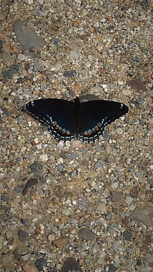 Ich liebe Butterflys lizenzfreie stockfotografie