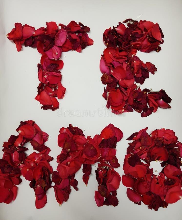Ich liebe dich auf spanisch, gebildet mit den roten rosafarbenen Blumenblättern stockfotos