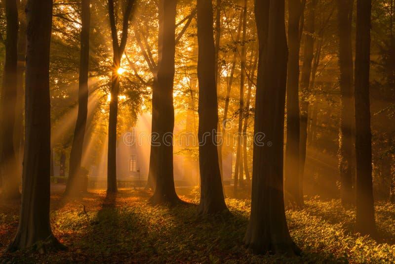 Ich liebe Herbst lizenzfreies stockfoto