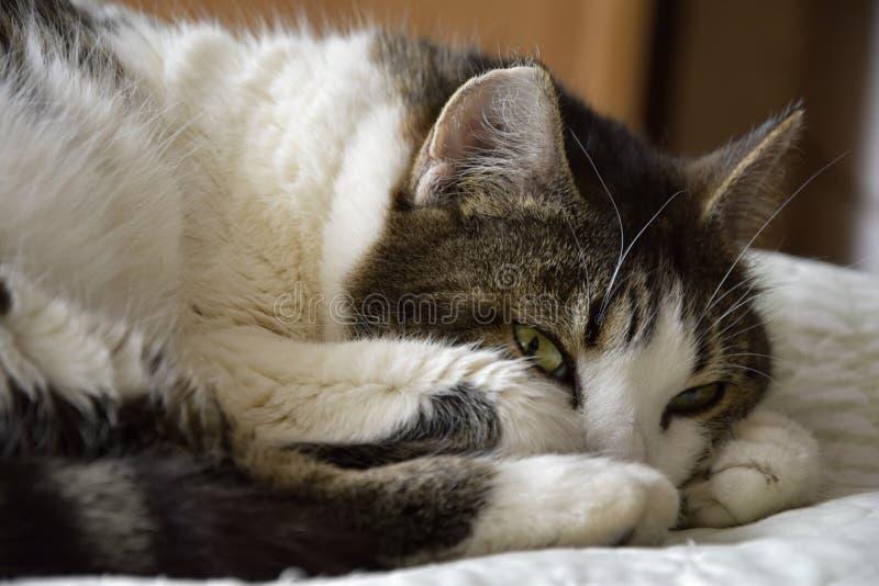 Ich schlafe nicht lizenzfreies stockfoto