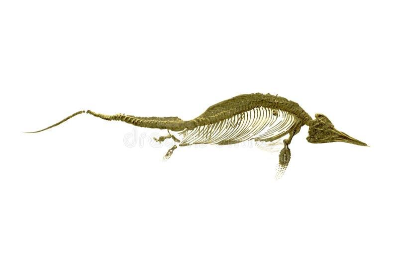 Ichthyosaur arkivbilder