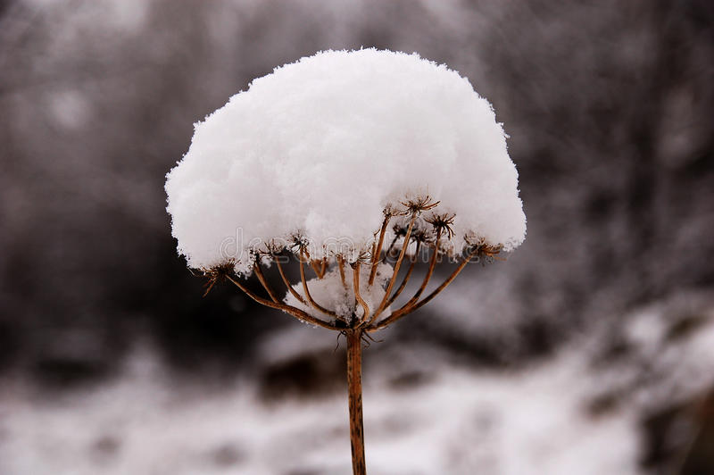 ici l'hiver photos stock