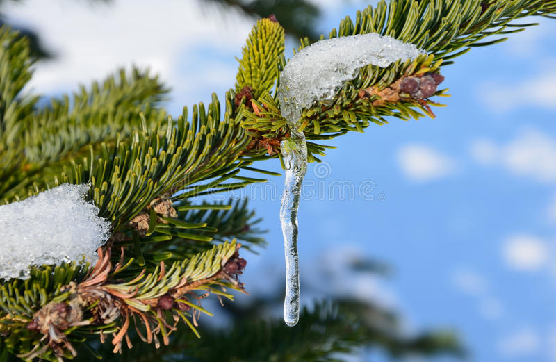 Icicle royalty free stock images