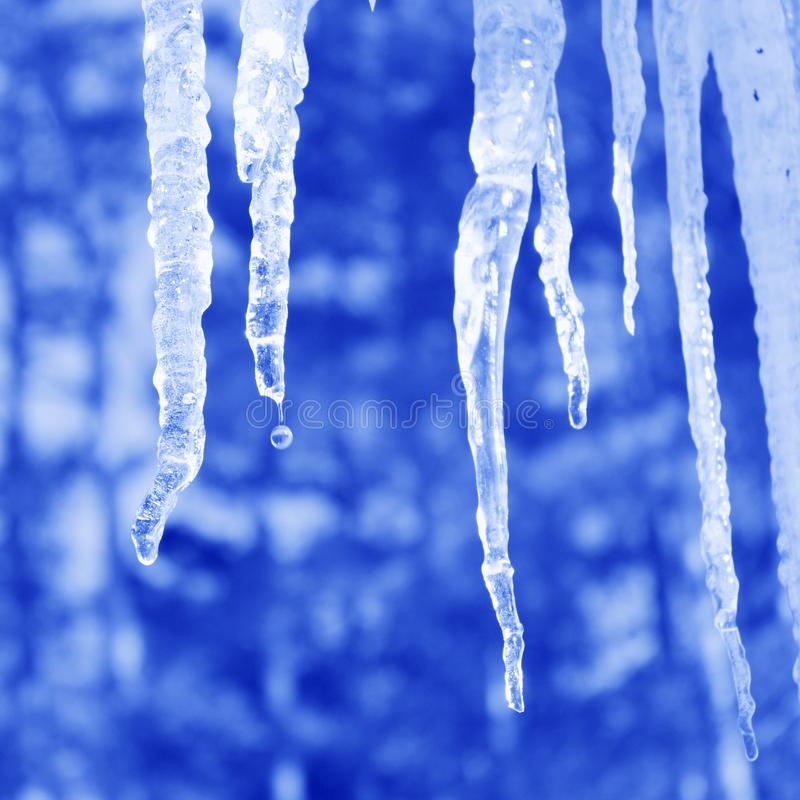 Free Icicle Pictures : Blue Background - Stock Photos Royalty Free Stock Images - 34092069