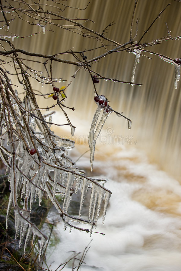 Download Icicles stock image. Image of coppice, frozen, icicle - 7047267